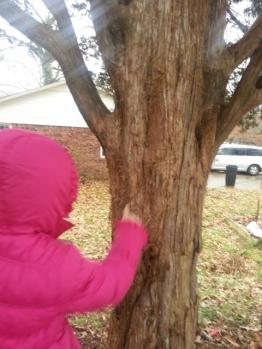 exploring the bark