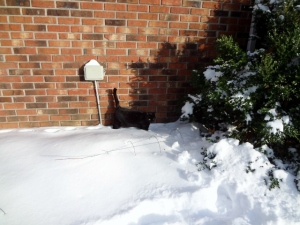 our unhappy cat in the snow