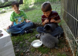 Oldest and Middle Boy playing with bunnies