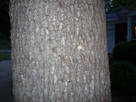 crawling up tree