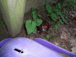 turtle friend
