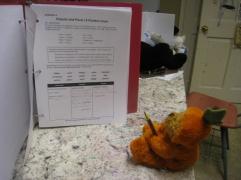 Pumpkin Bear learning Latin