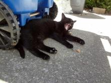 our sleepy kitty