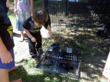 Littlest saying a temporary goodbye to the bunnies
