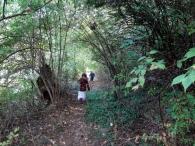 path to creek near house