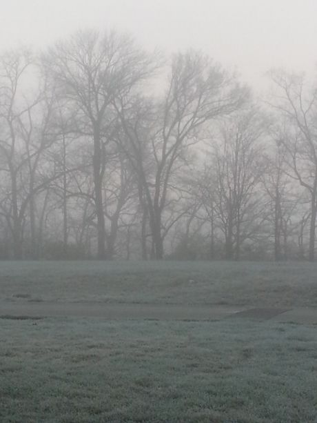 frosty foggy morning
