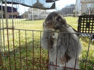 Polly...my cute bunny