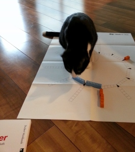 Boots loves math manipulatives