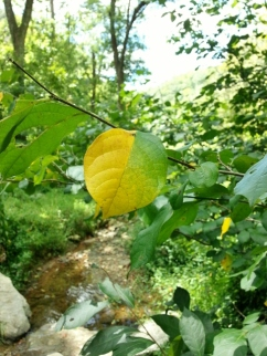 hint of fall