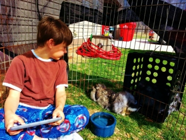 Middle Boy watching the bunnies