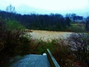 swollen Elkhorn Creek