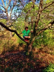 Middle Boy in tree