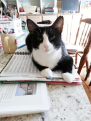 Boots and the doomed lesson planner