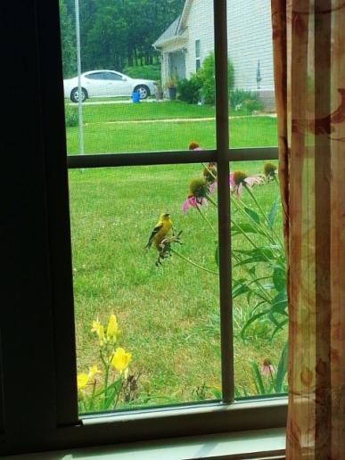 Little bird friend at the window