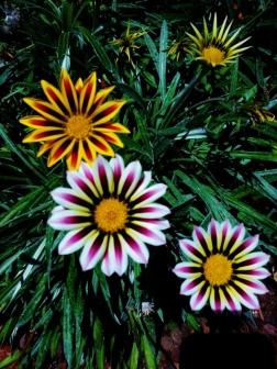 such a pretty flower