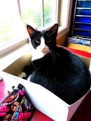Grumpy kitty in a box