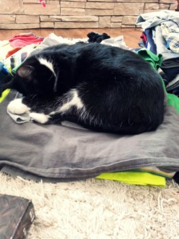 clean laundry, sleeping kitty