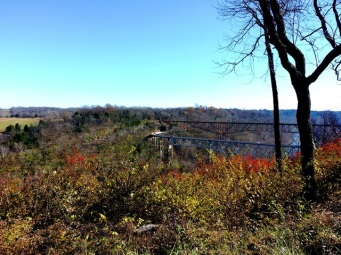 view from Wild Turkey