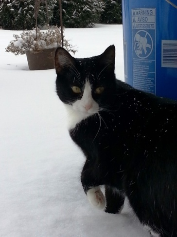 Boots isn't sure about the snow