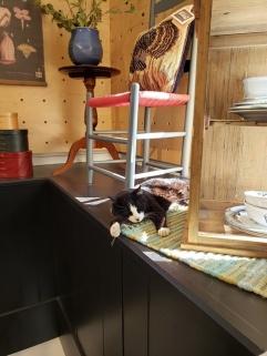 kitty at Shakertown